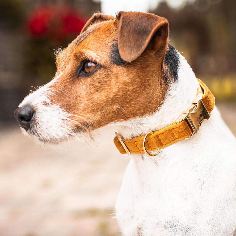 Kentucky Dogwear Halsband Dog Collar